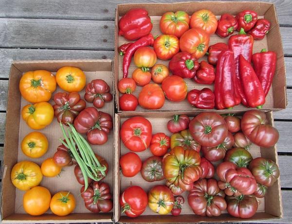 170908 harvest Friday