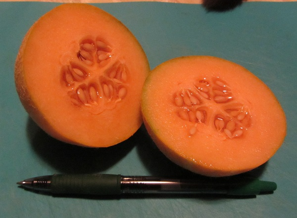 170912 melon