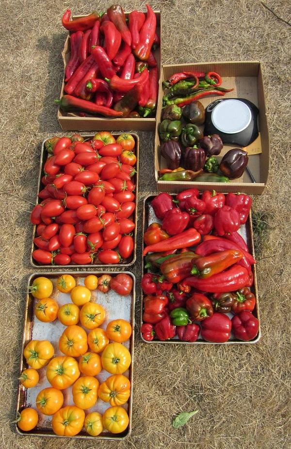 170916 Harvest Saturday