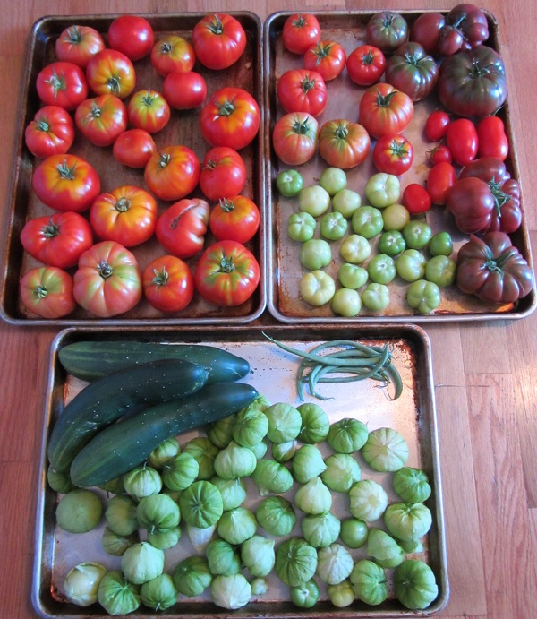 170904 harvest