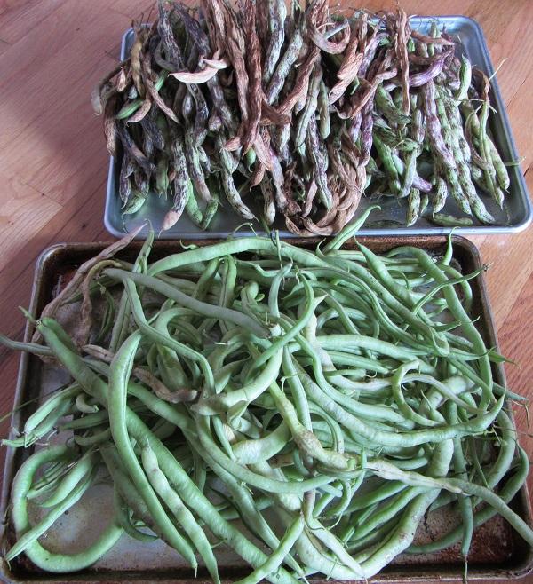 181014 beans