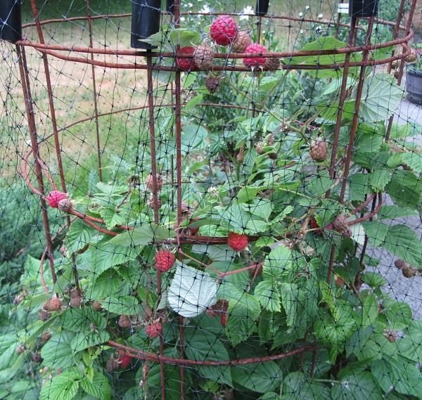 190622 raspberry