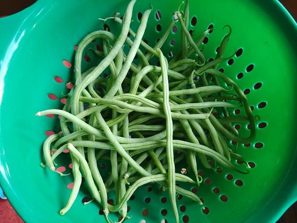 200719 fortex beans