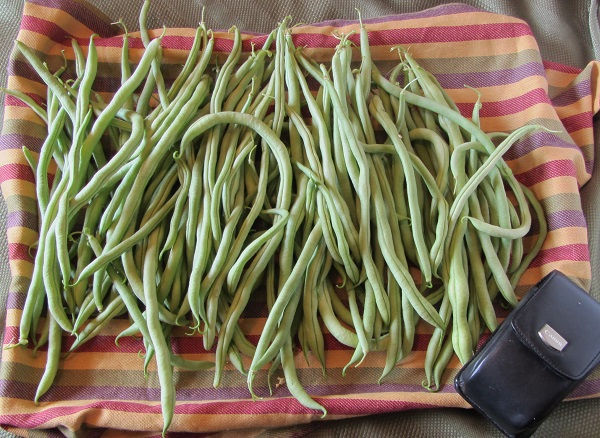 190804 fortex beans